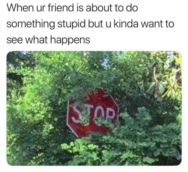 """When ur friend is about to do something stupid but u kinda want to see what happens."""