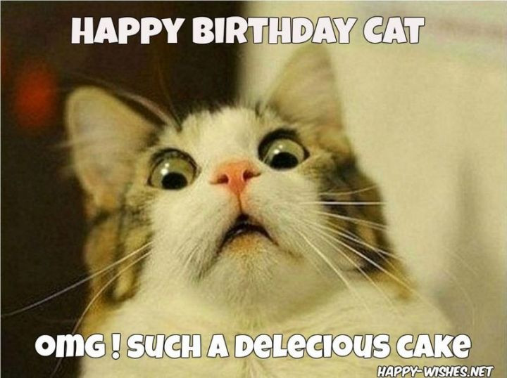 "101 Funny Cat Birthday Memes - ""Happy birthday cat. OMG! Such a delecious cake."""