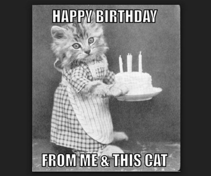 "101 Funny Cat Birthday Memes - ""Happy birthday from me and this cat."""