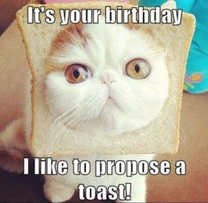 "101 Funny Cat Birthday Memes - ""It's your birthday. I like to propose a toast!"""