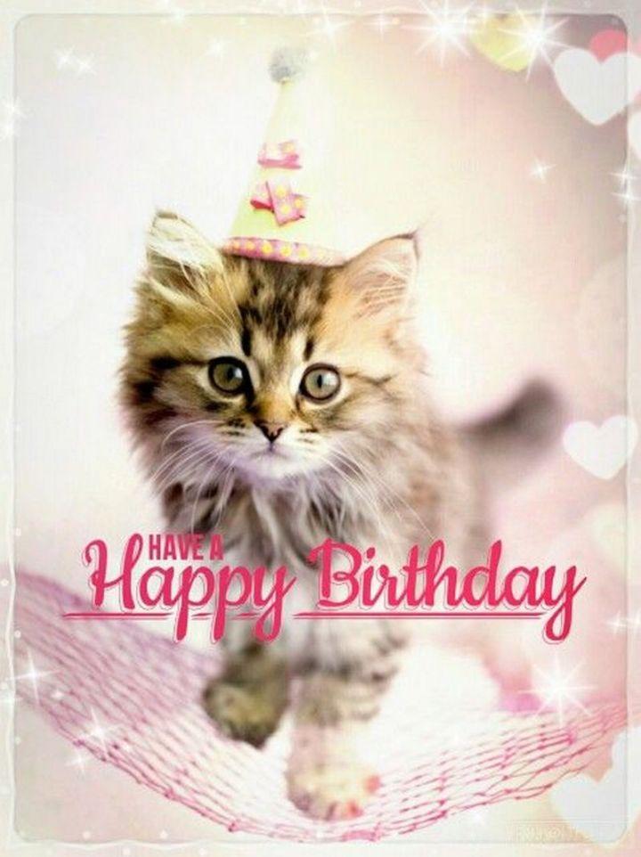 "101 Funny Cat Birthday Memes - ""Have a Happy Birthday."""