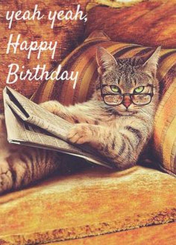 "101 Funny Cat Birthday Memes - ""Yeah yeah, Happy Birthday."""