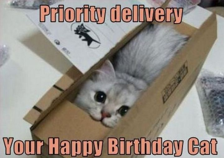 "101 Funny Cat Birthday Memes - ""Priority delivery. Your Happy Birthday Cat."""
