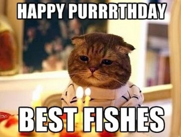"101 Funny Cat Birthday Memes - ""Happy Puuuthday. Best fishes."""