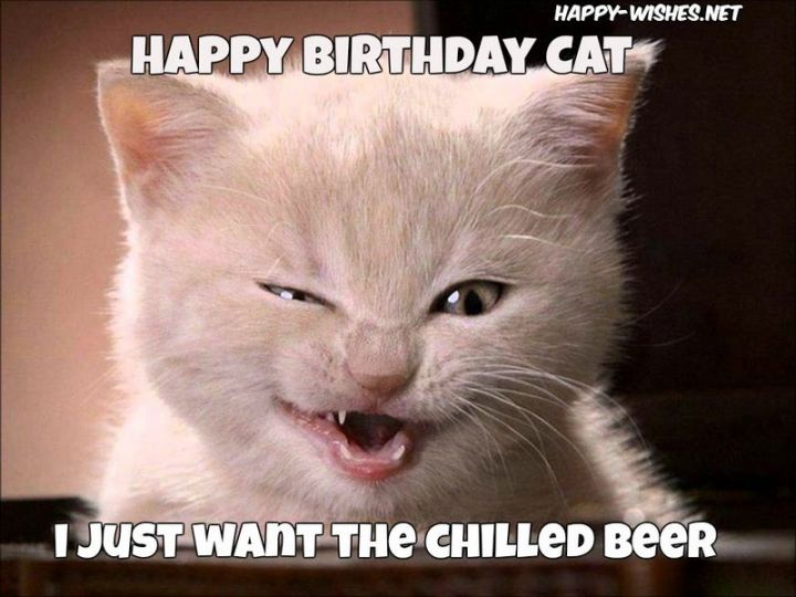 "101 Funny Cat Birthday Memes - ""Happy birthday cat. I just want the chilled beer."""