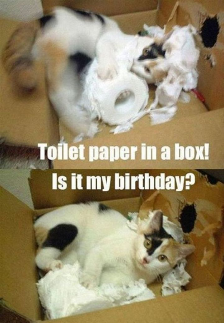 "101 Funny Cat Birthday Memes - ""Toilet paper in a box! Is it my birthday?"""