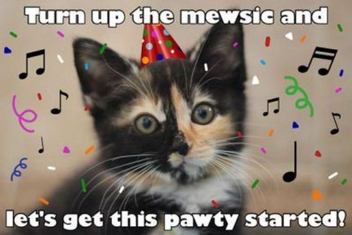 "101 Funny Cat Birthday Memes - ""Turn up the mewsic and let's get this pawty started!"""