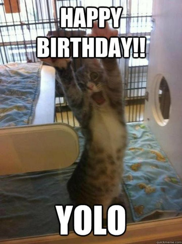 "101 Funny Cat Birthday Memes - ""Happy birthday!! YOLO."""