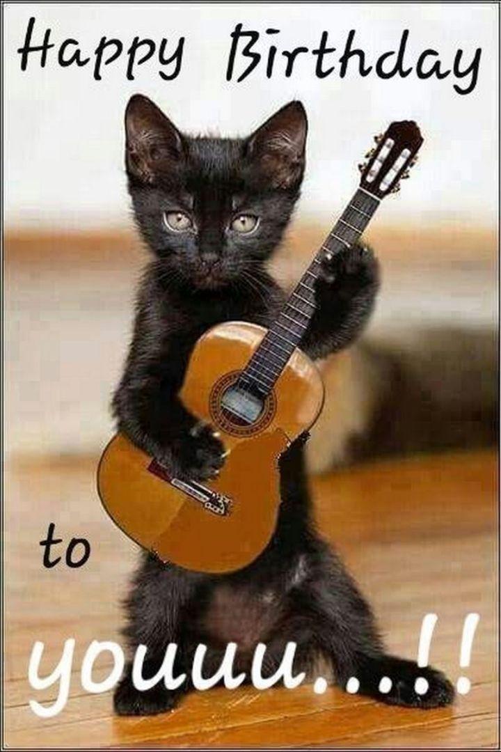 "101 Funny Cat Birthday Memes - ""Happy birthday to youuu...!!"""