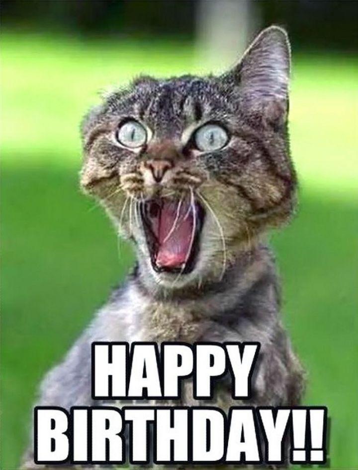 """101 Funny Cat Birthday Memes - """"Happy birthday!!"""""""