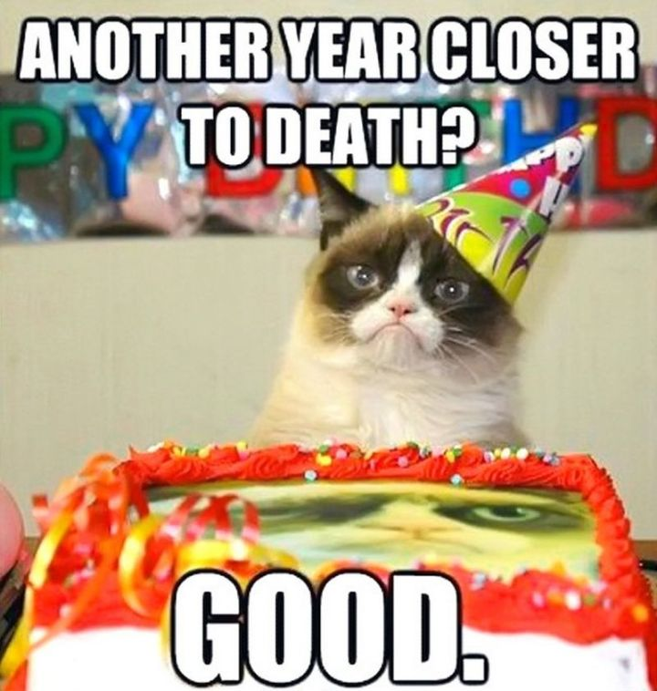 "101 Funny Cat Birthday Memes - ""Another year closer to death? Good."""