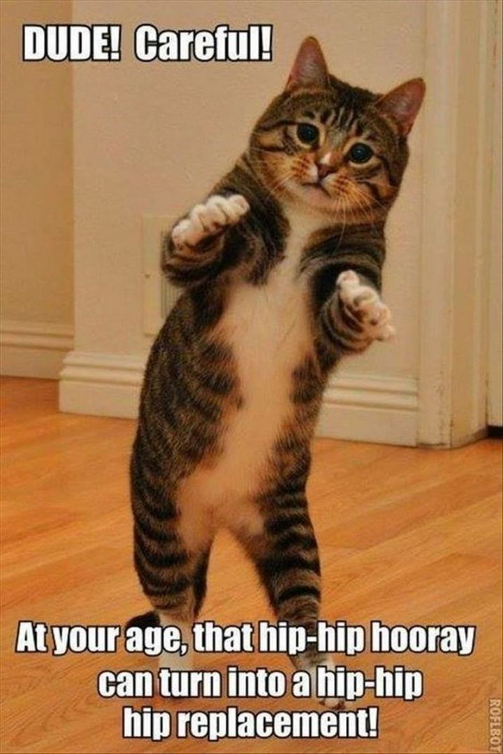 "101 Funny Cat Birthday Memes - ""DUDE! Careful! At your age, that hip-hip-hooray can turn into a hip-hip hip replacement."""