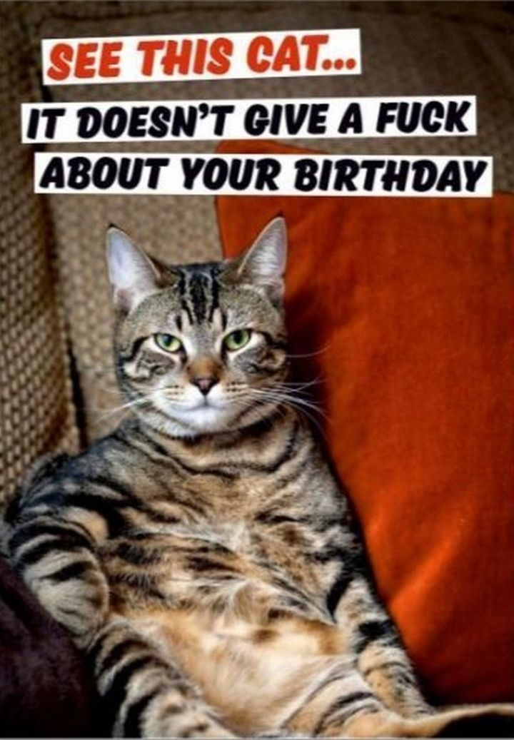 "101 Funny Cat Birthday Memes - ""See this cat...it doesn't give a crap about your birthday."""
