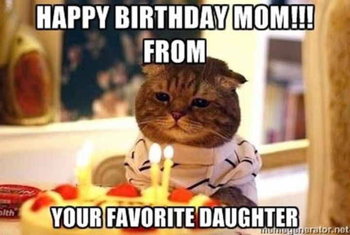 "101 Funny Cat Birthday Memes - ""Happy birthday mom!!! From your favorite daughter."""