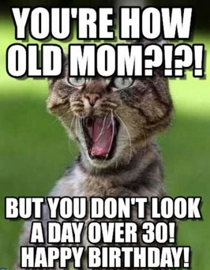 "101 Funny Cat Birthday Memes - ""You're how old mom?!?! But you don't look a day over 30! Happy birthday!"""