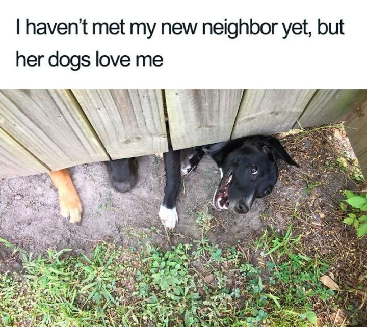 "55 Cute Dog Posts - ""I haven't met my new neighbor yet, but her dogs love me."""