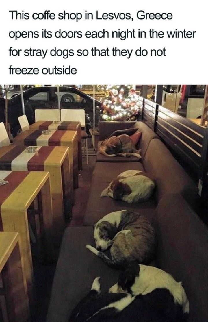 "55 Cute Dog Posts - ""This coffee shop in Lesvos, Greece opens its doors each night in the winter for stray dogs so that they do not freeze outside."""