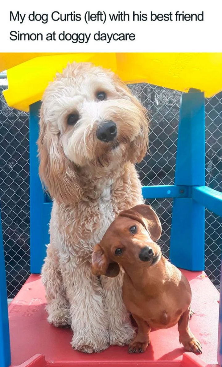 "55 Cute Dog Posts - ""My dog Curtis (left) and his best friend Simon at doggy daycare."""