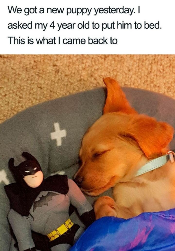 "55 Cute Dog Posts - ""We got a new puppy yesterday. I asked my 4-year-old to put him to bed. This is what I came back to."""