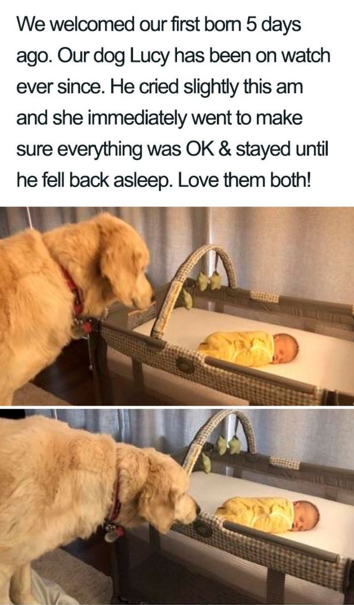 "55 Cute Dog Posts - ""We welcomed our first born 5 days ago. Our dog Lucy has been on watch ever since. He cried slightly this a.m. and she immediately went to make sure everything was OK and stayed until he fell back asleep. Love them both!"""