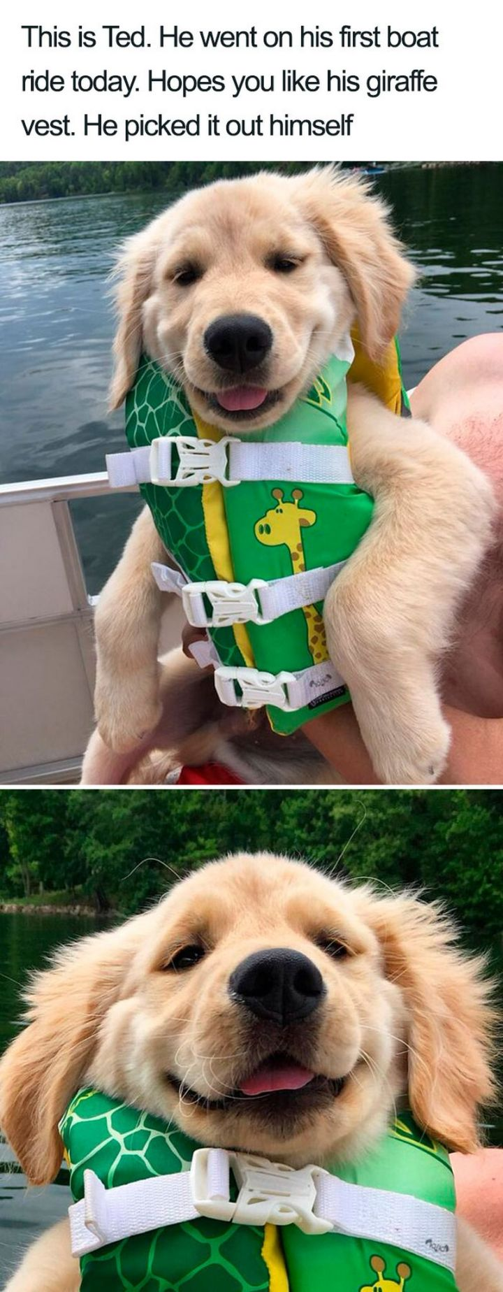 "55 Cute Dog Posts - ""This is Ted. He went on his first boat ride today. Hopes you like his giraffe vest. He picked it out himself."""