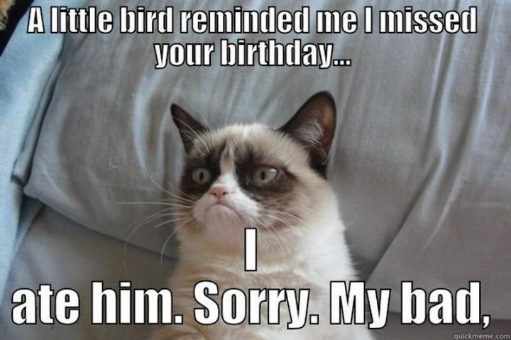 """85 Happy Belated Birthday Memes - """"A little bird reminded me I missed your birthday...I ate him. Sorry. My bad."""""""