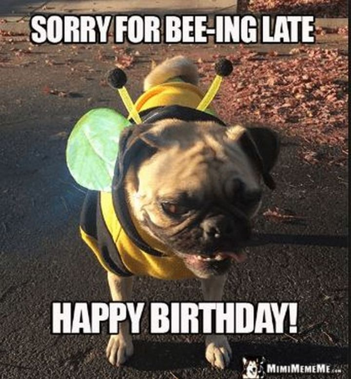 """85 Happy Belated Birthday Memes - """"Sorry for bee-ing late. Happy Birthday!"""""""