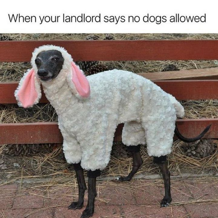 "67 Hilarious Memes - ""When your landlord says no dogs allowed."""