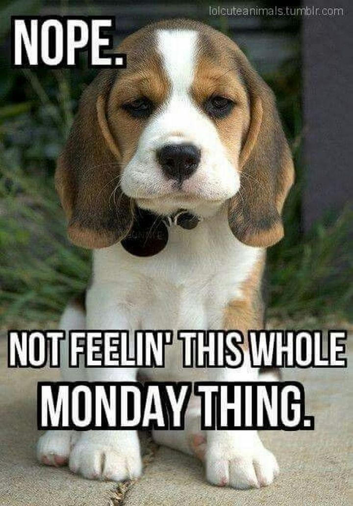 "67 Hilarious Memes - ""Nope. Not feelin' this whole Monday thing."""