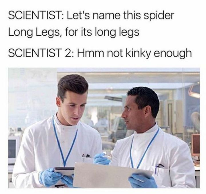 "67 Hilarious Memes - ""Scientist: Let's name this spider Long Legs, for its long legs. Scientist 2: Hmm not kinky enough."""