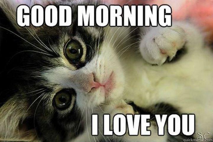 """55 Love Memes - """"Good morning. I love you."""""""