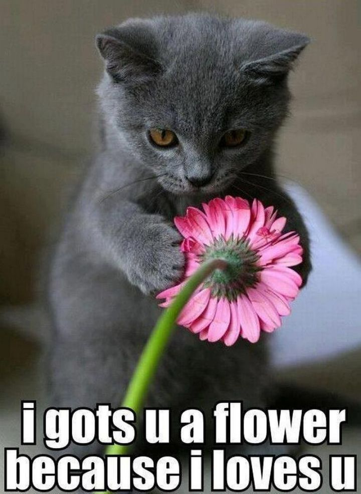 "55 Love Memes - ""I gots u a flower because I loves u."""