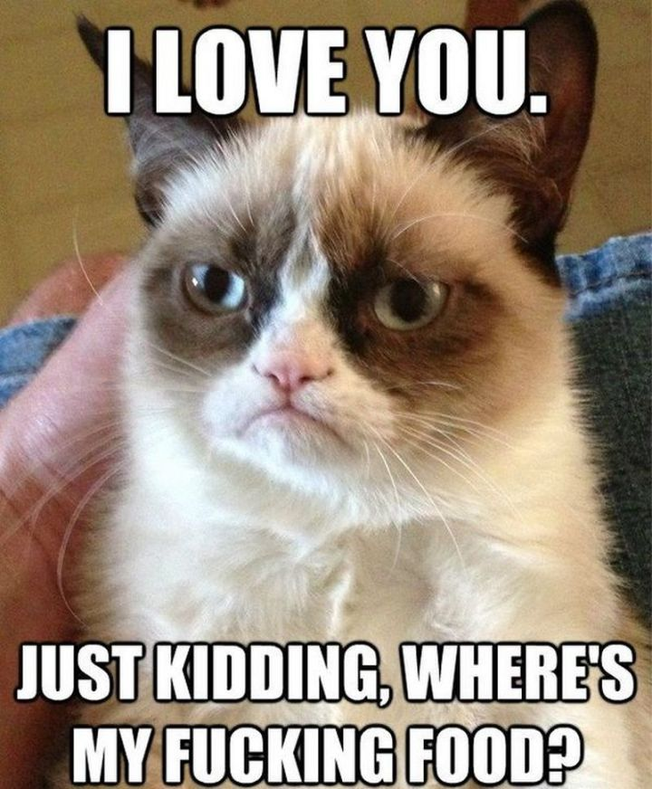 "55 Love Memes - ""I love you. Just kidding, where's my f***ing food?"""