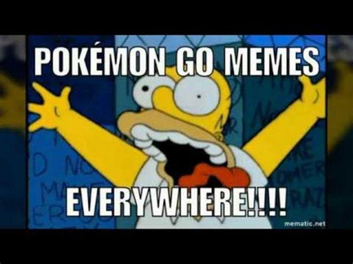"""71 Pokémon memes - """"Pokémon Go memes everywhere!!!!"""""""