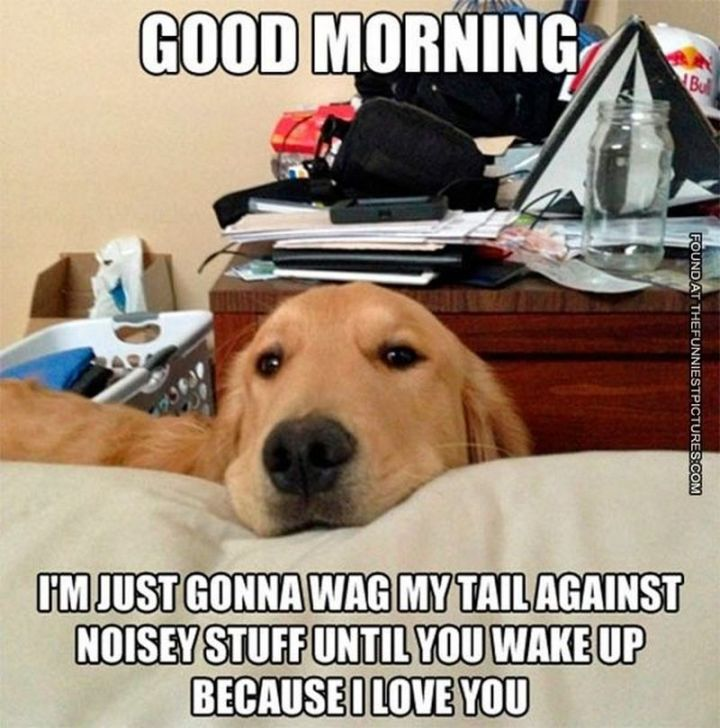"101 Funny Good Morning Memes - ""Good morning. I'm just gonna wag my tail against noisy stuff until you wake up because I love you."""