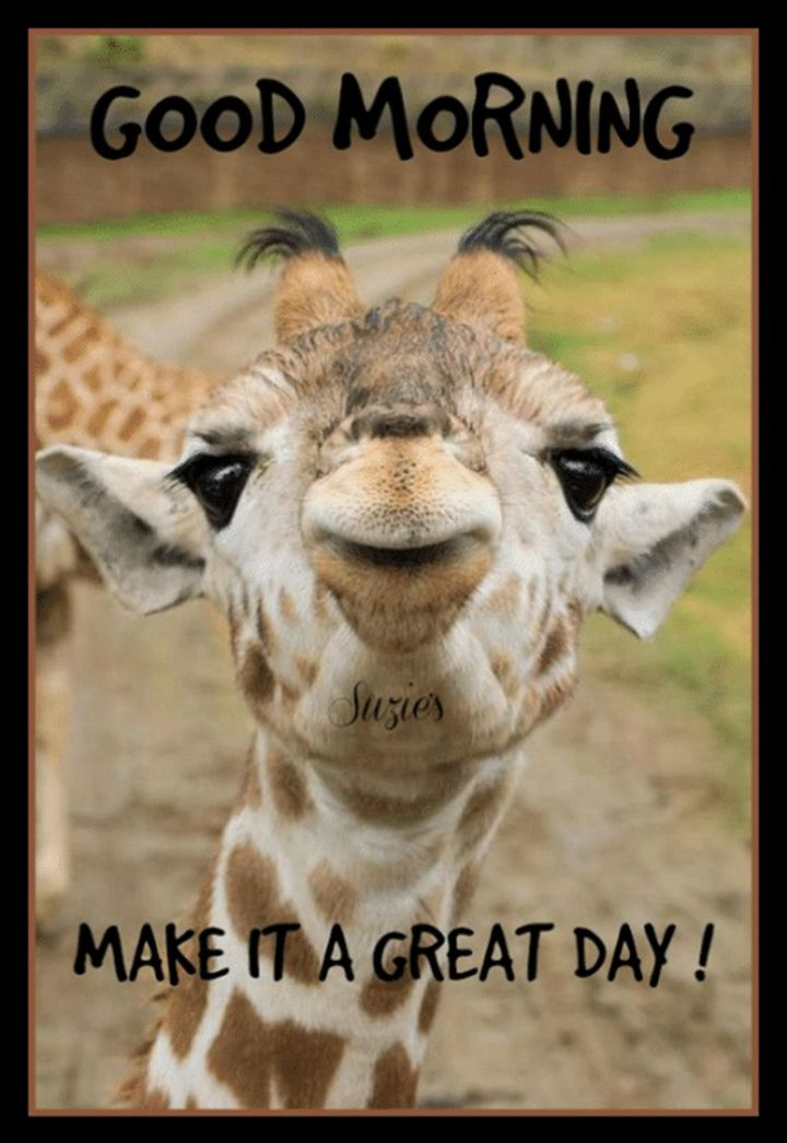 "101 Funny Good Morning Memes - ""Good morning, make it a great day!"""