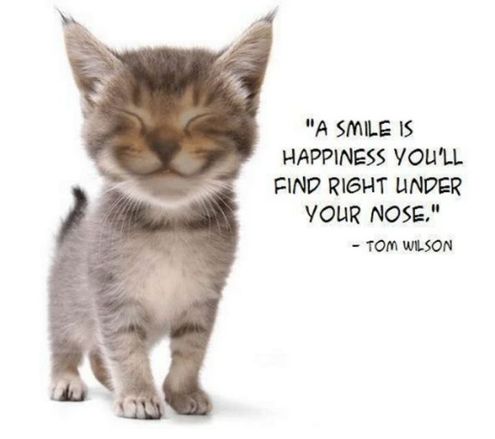 "55 Smile Quotes - ""A smile is happiness you'll find right under your nose."" - Tom Wilson"