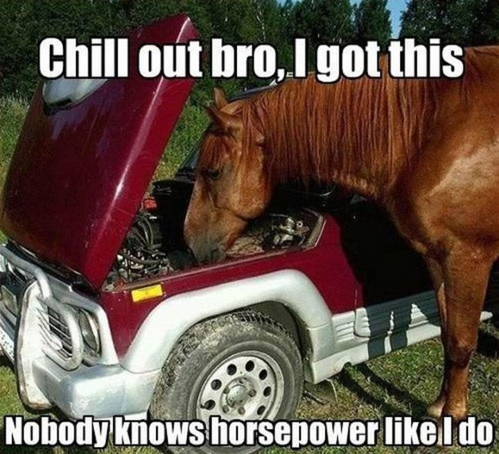 "85 Car Memes - ""Chill out bro, I got this. Nobody knows horsepower as I do."""