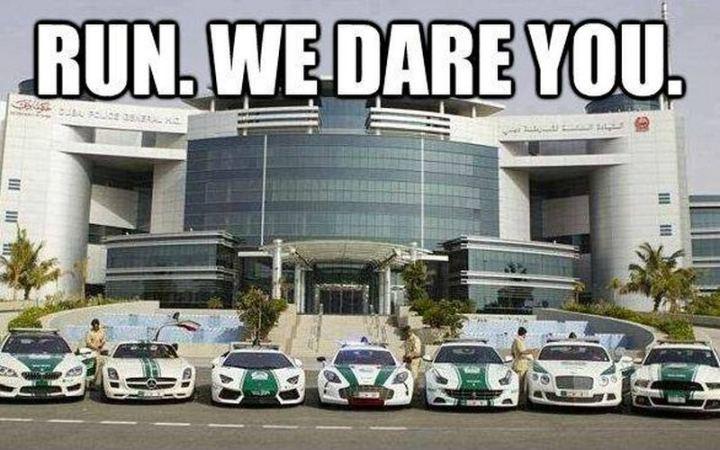 """85 Car Memes - """"Run. We dare you."""""""