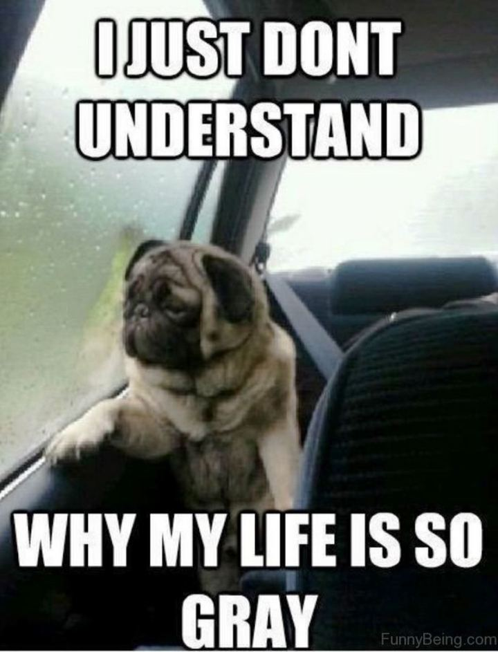 """81 Funny Life Memes - """"I just don't understand why my life is so gray."""""""