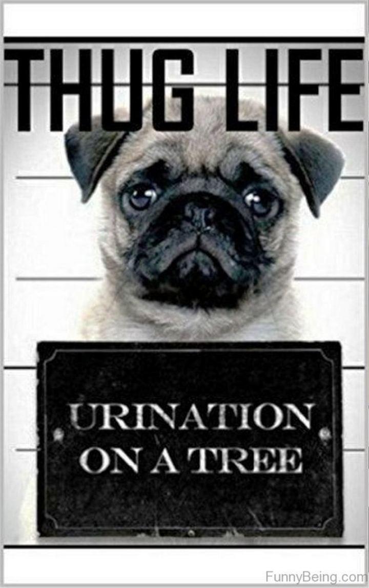 """Thug life. Urination on a tree."""