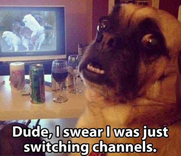 """71 Funny Dirty Memes - """"Dude, I swear I was just switching channels."""""""