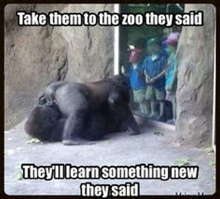 """71 Funny Dirty Memes - """"Take them to the zoo they said. They'll learn something new they said."""""""