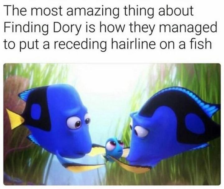 "51 Funny Disney Memes - ""The most amazing thing about Finding Dory is how they managed to put a receding hairline on a fish."""