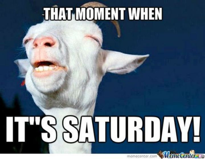 "101 Saturday Memes - ""That moment when it's Saturday!"""