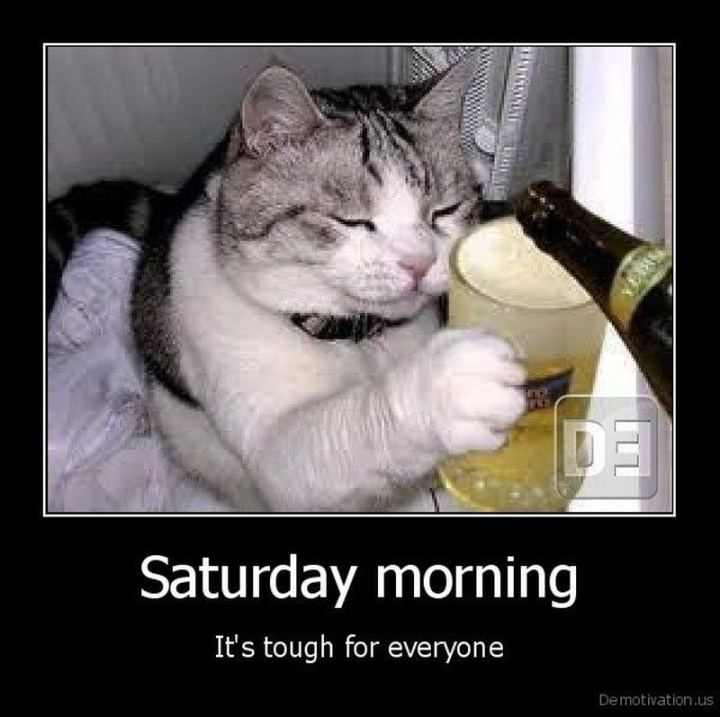 "101 Saturday Memes - ""Saturday morning. It's tough for everyone."""