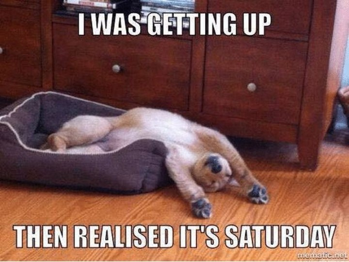 "101 Saturday Memes - ""I was getting up then realized it's Saturday."""