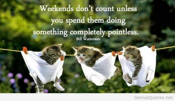 "101 Saturday Memes - ""Weekends don't count unless you spend them doing something completely pointless."" - Bill Watterson"