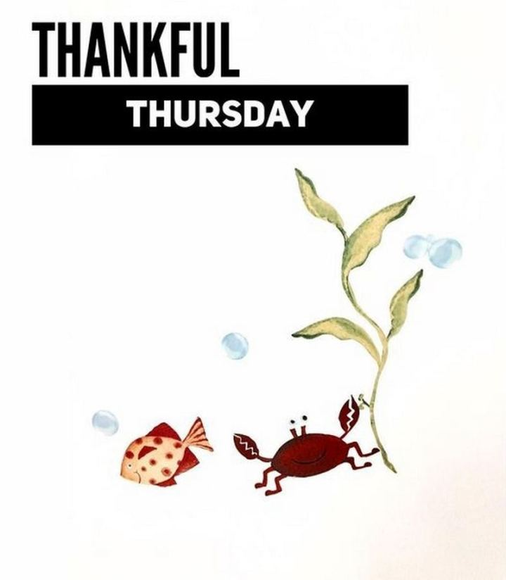 """Thankful Thursday."""