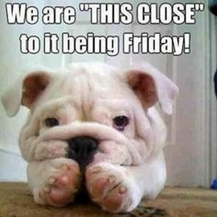 """We are 'THIS CLOSE' to it being Friday!"""